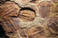 三叶虫为什么可以成为地球生物圈的第一个霸主?