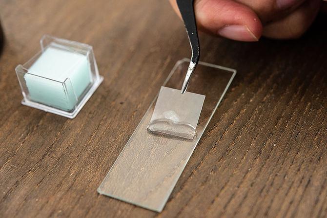 挑战显微镜用荣耀V20上课教室生物课v教室细图片重现的初中大全初中生图片