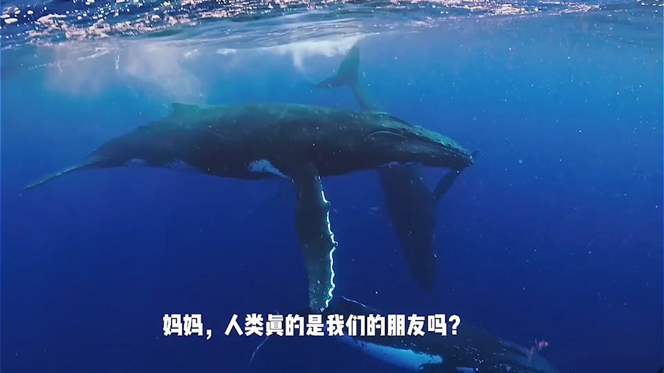 """""""鲸碳之歌""""公布获奖!对白及短视频改编竞赛近千人参与"""