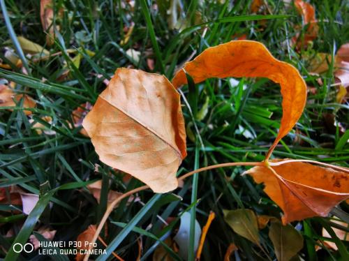 华为P30 Pro摄影教程:学会这两招,轻松留下秋季美景